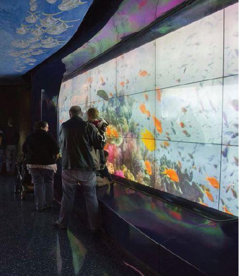 Georgia Aquarium Video Wall Case Study